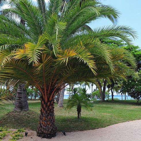 types-of-palm-trees-2132854-hero-38539d840aff47fdb20792096b83189e.jpg