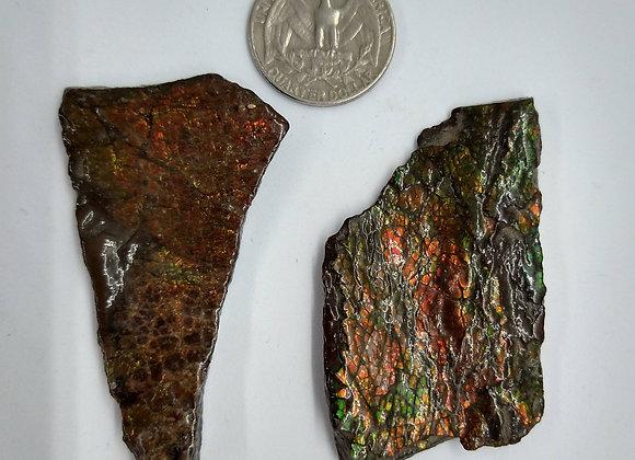 Dragon Skin Ammolite