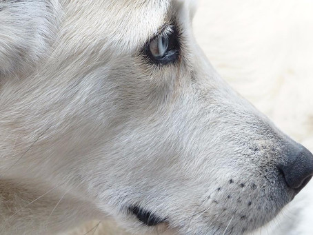 Dogs in Need of Space: achieving harmony and respect