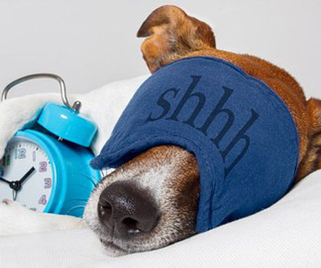 Changing your clocks this weekend? Spare a thought for your dog!
