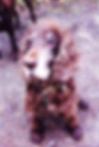 Viervoeten Hondenuitlaatservice