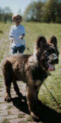 Viervoeten Hondenuitlaatservice Amsterdam Noord, Oost, IJburg en Zeeburg