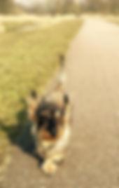 Viervoeten Hondenuitlatservice