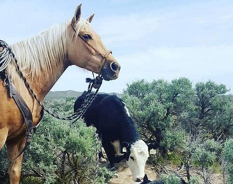 cowhorsebaby.jpg