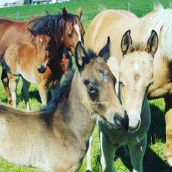 2017 Foals