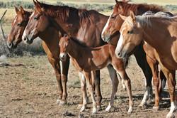 Zimerosas baby and mares.jpg