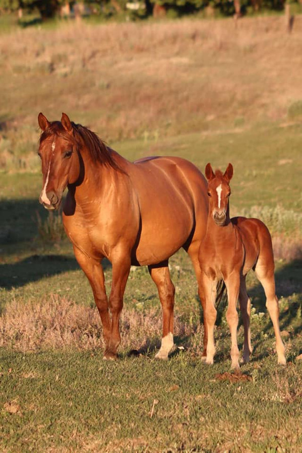 One Nice Chic 2021 Filly