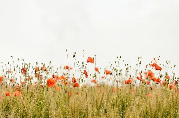 nature_fleurs_environnement_éthique_Ndo