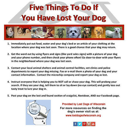 5-things-if-youve-lost-your-dog.jpg