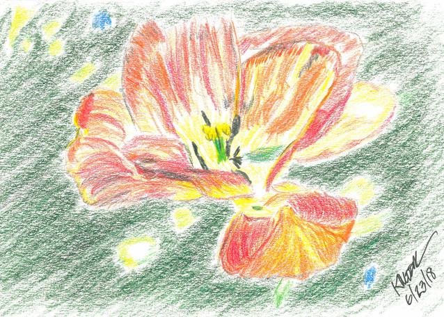 Irish Flower