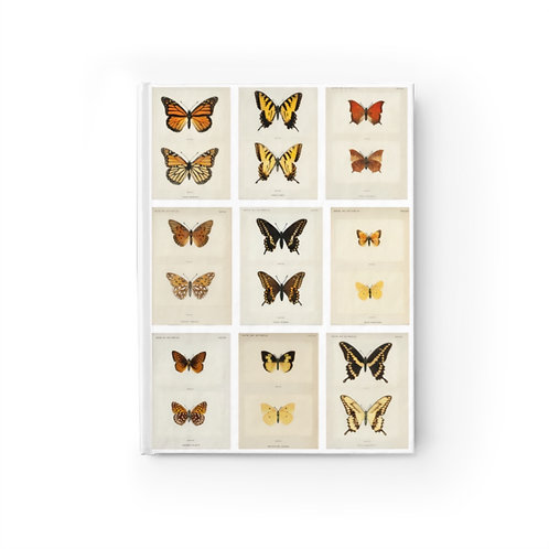 Moths and Butterflies, 1900 — Ruled Line Journal