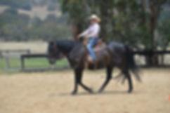 Western saddles for sale