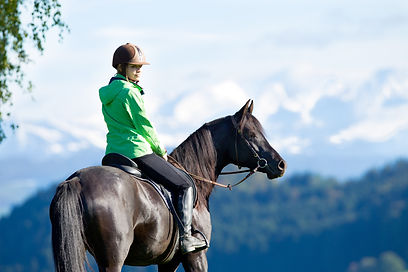 General Purpose Saddles for Sale