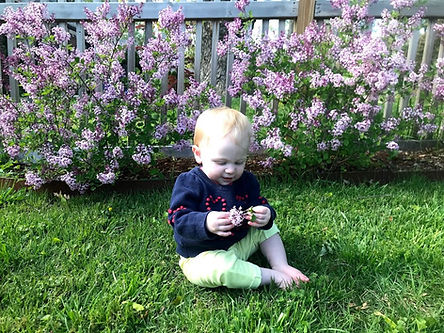 amelia with lilacs 2020.jpg