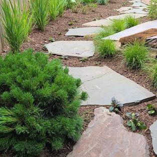 Natural zen garden in NW DC