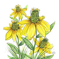 green headed coneflower