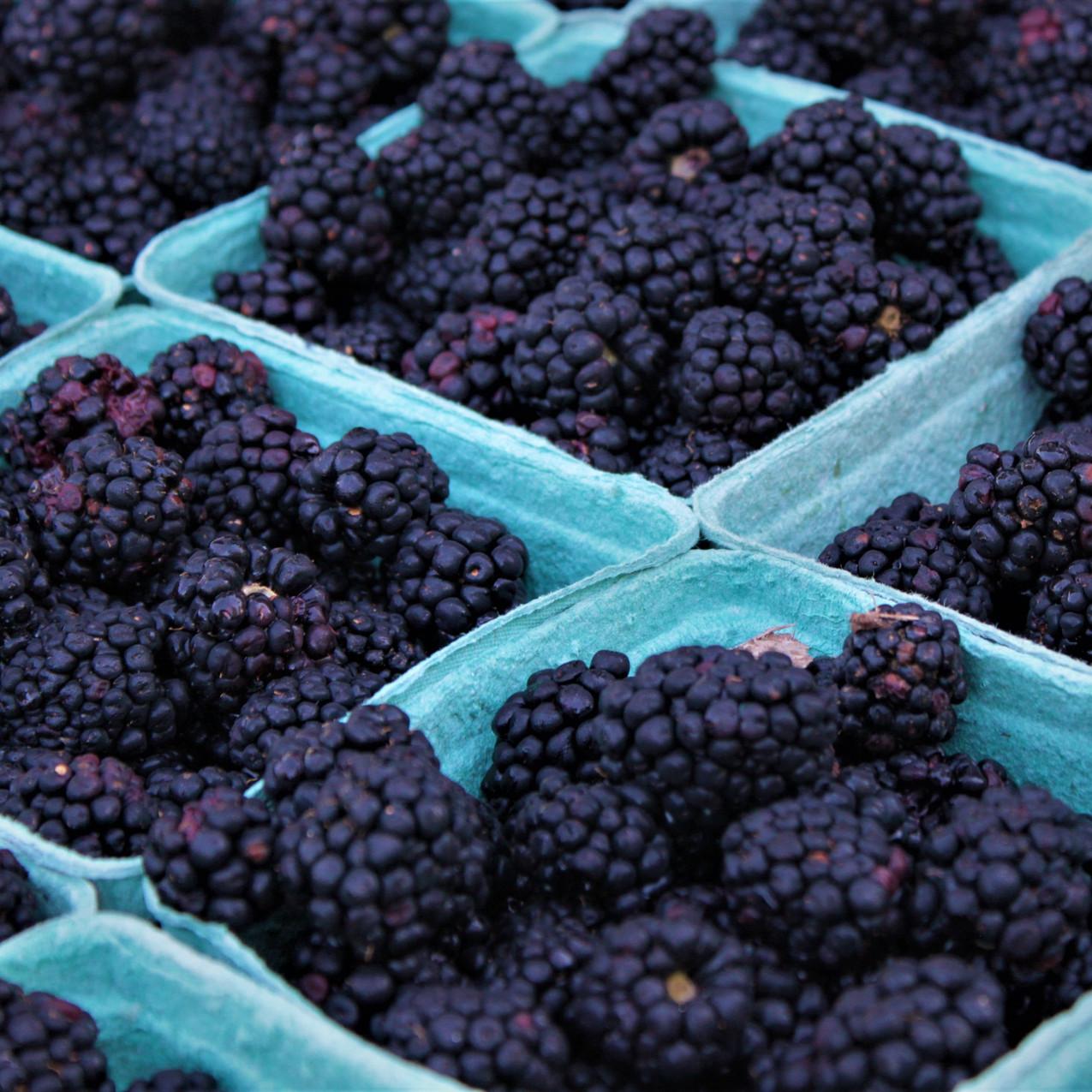 McMerton Blackberries