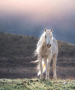 horse vertical.png