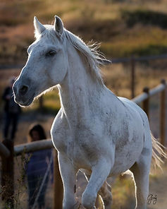 visits horse.jpeg