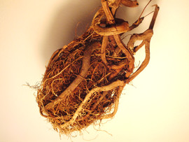 Root Heart