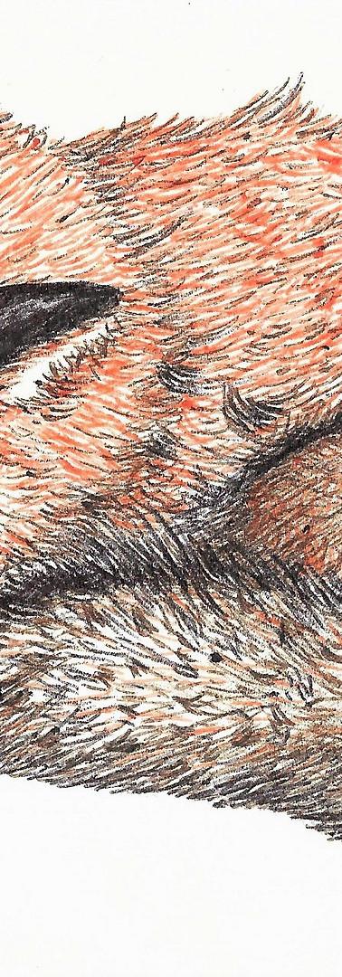 Biro Fox