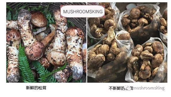而对于干松茸来说,因为新鲜度无法判定,加之干货会缩水,所以新鲜松茸的评级无法适用于干货。