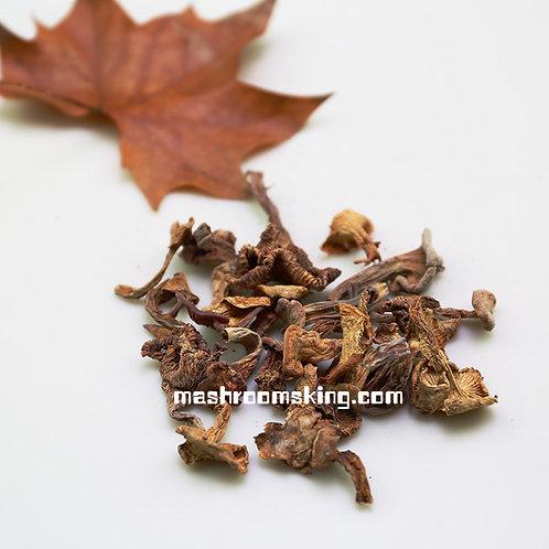 Wild Chanterelle 野生鸡油菌(云南陆良)