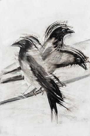 'Hooded Crow Super' by Elli Lestas