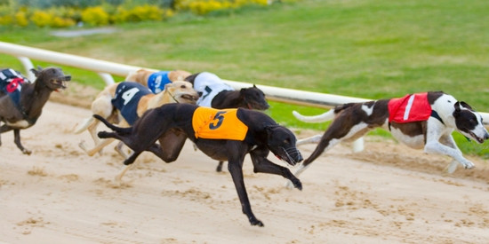 Go Greyhound Racing in Ireland, locations across the country