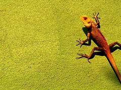 草上の爬虫類