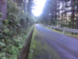 CIMG3301-1.jpg