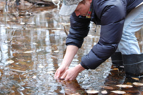 Finding salamander eggs_EDavis.jpg