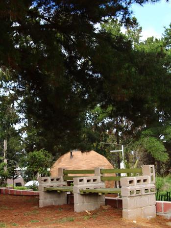 Bancas bajo árboles