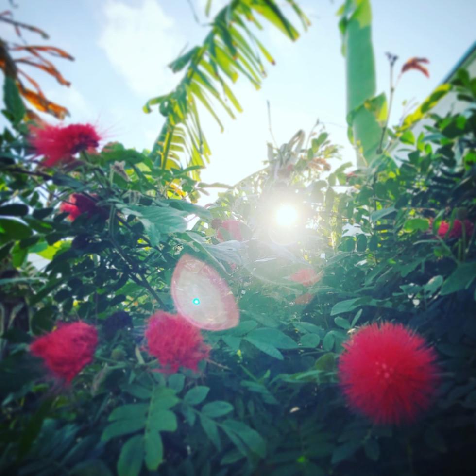 Bonbon flower