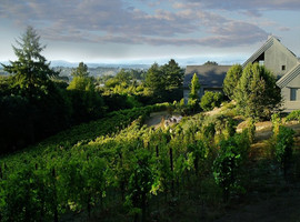 Halleck Vineyard_Photo 6.jpg