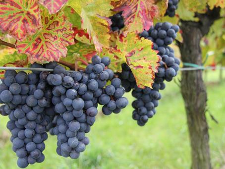 Weinfestkalender / Wine Fête Calender