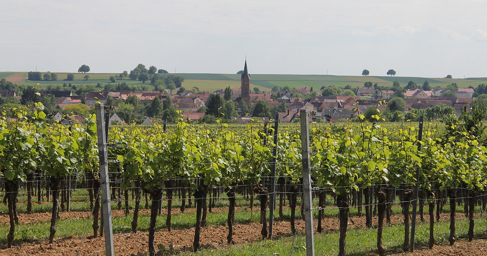 Blick auf Kapellen-Drusweiler, Pension No. 31 im Rosengarten