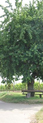 Unterm Kirschbaum ist ein schönes Plätzc