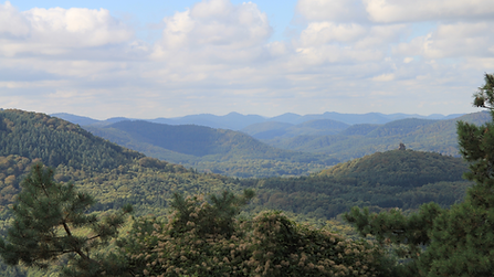 Blick über den Pfälzer Wald.png
