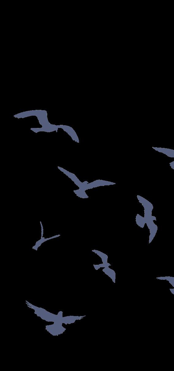 Vogelschwarm_edited.png