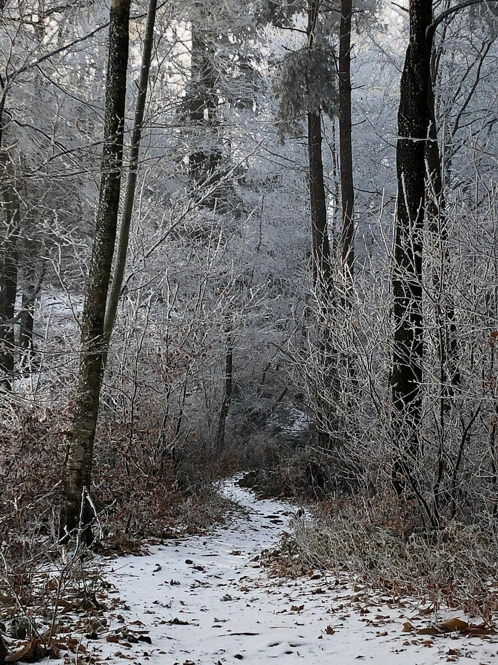 Winterstimmung im Pfälzer Wald / Wintry sceen in the Pfalz Forest