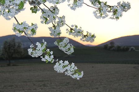 Frühling 3.JPG