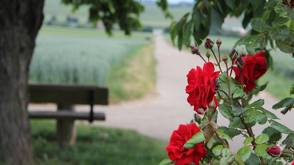 der Rosengarten-Wanderweg bietet schöne