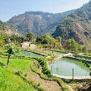 nepal_agro2020011.jpg