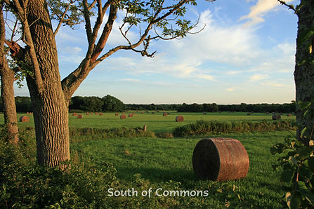 South of Commons with text copy.jpg