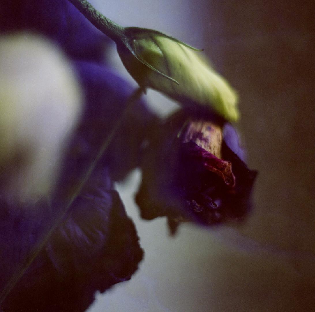 Flower IV