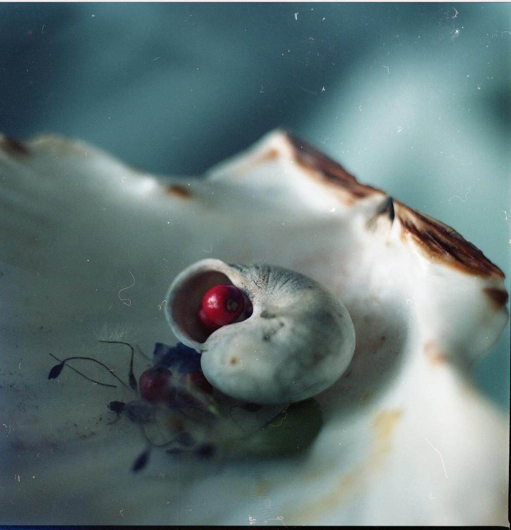 Meditacia o zrodení z morskej peny a tak