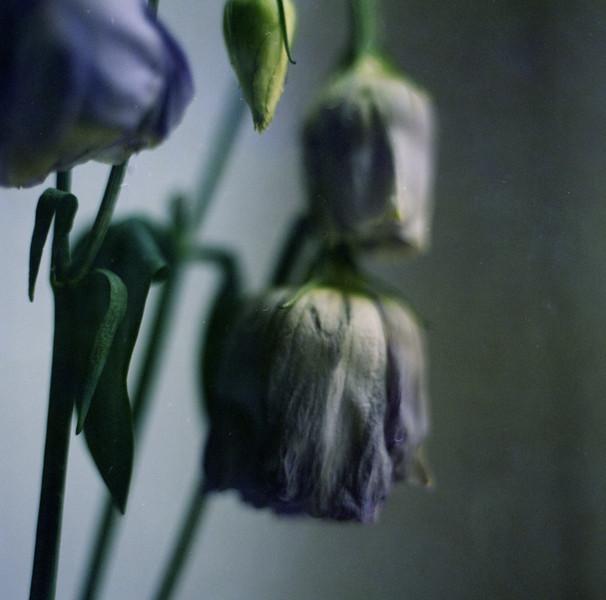 Flower VII.