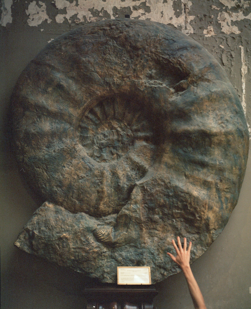 Biggest shell in the world