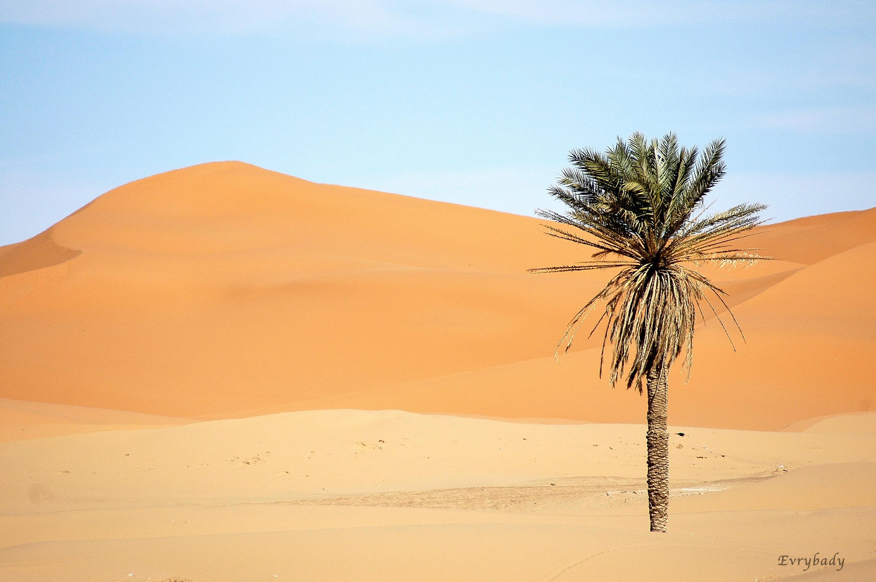 MaroccoMerzouga1